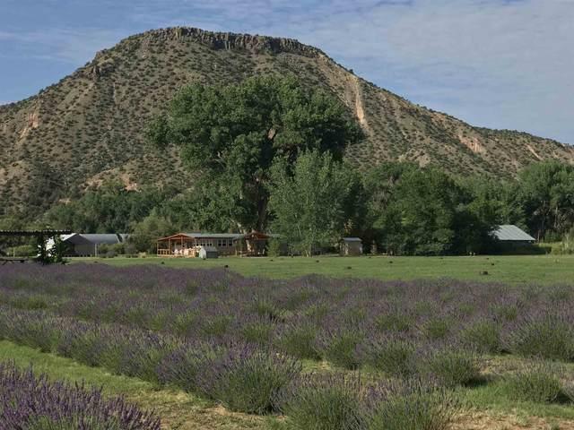 Adobe Lavender Farm, Abiquiu, NM 87510 (MLS #202103226) :: The Very Best of Santa Fe