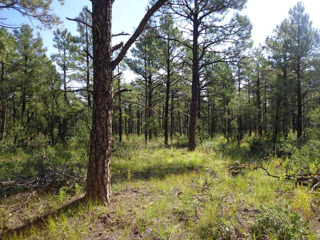 Tract 8 Ojitos Frios Ranches, Las Vegas, NM 87701 (MLS #202104017) :: The Very Best of Santa Fe