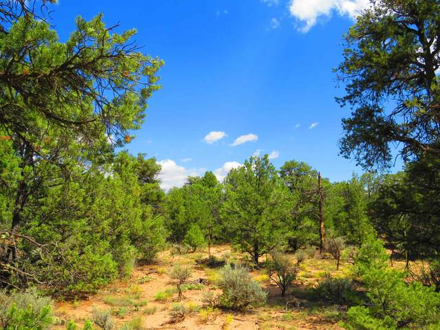 TBD Forest Service Rd. 556, Carson, NM 87517 (MLS #202104066) :: Neil Lyon Group | Sotheby's International Realty