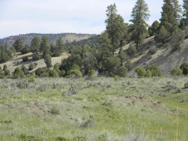Willow Way Tract N-4, Chama, NM 87520 (MLS #201702893) :: The Desmond Group