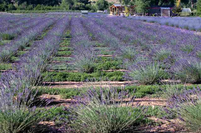 Purple Adobe Lavender Farm, Abiquiu, NM 87510 (MLS #201803535) :: The Very Best of Santa Fe