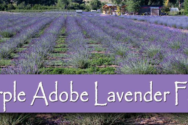 Purple Adobe Lavender Farm, Abiquiu, NM 87510 (MLS #201803540) :: The Very Best of Santa Fe