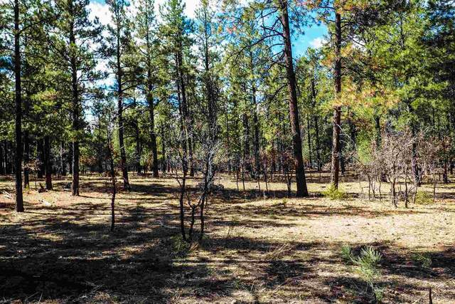 Bk 2, Lot 23 Hollow Oak, Brazos Estates Brazos Estate, Chama, NM 87520 (MLS #202001293) :: The Desmond Hamilton Group