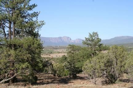 Chama, NM 87520 :: Summit Group Real Estate Professionals