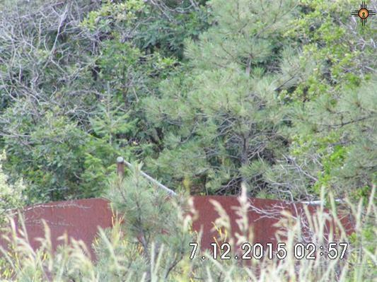 19 C-100 Cebollita Canyon Parcel B, Mora, NM 87701 (MLS #201604255) :: The Bigelow Team / Realty One of New Mexico