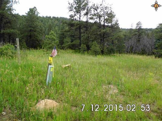 NM 19 C-100 Cebollita Canyon, Mora, NM 87701 (MLS #201604256) :: The Bigelow Team / Realty One of New Mexico