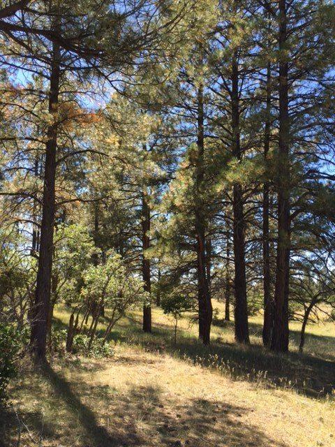 100 Columbine, Chama, NM 87520 (MLS #201704130) :: The Bigelow Team / Realty One of New Mexico