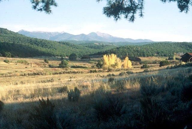 Lot 6 Mountain Mahogany On Cr 69 - Photo 1