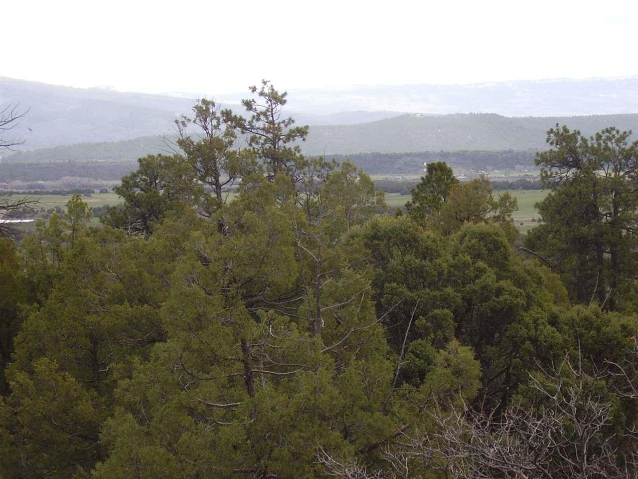 Turkey Trail, Laguna Vista - Photo 1