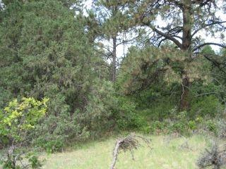 Tract #5 Ponderosa Pines Sd, Chama, NM 87520 (MLS #201800732) :: The Very Best of Santa Fe