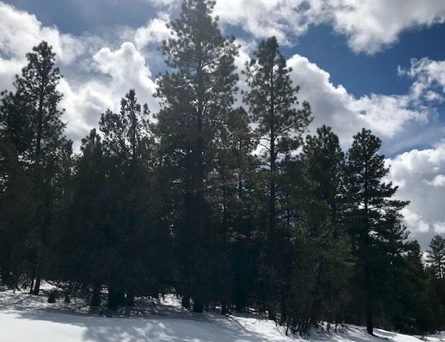 9 Buckman Road, Chama, NM 87520 (MLS #201800806) :: The Desmond Group