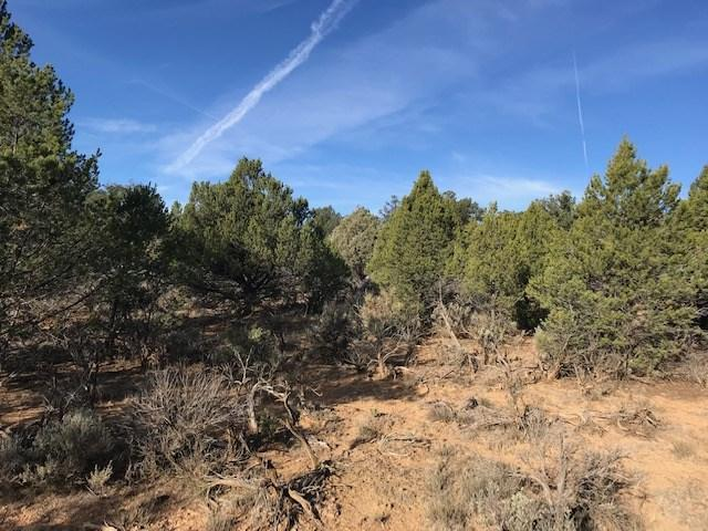 Unit 5 Lot 19 Rancho De Vado, Tierra Amarilla, NM 87575 (MLS #201805055) :: The Desmond Group