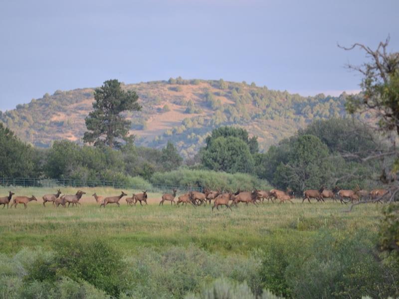 Chama River Ranch - Photo 1