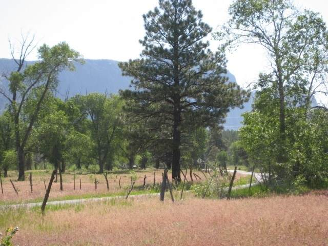 West Tract Cottonwood Tracts, Nmsr 512, Chama, NM 87520 (MLS #202000957) :: The Desmond Hamilton Group