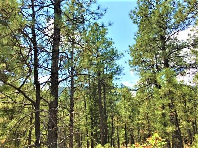 10 acres Trumbull Canyon, Mora, NM 87732 (MLS #202002327) :: The Very Best of Santa Fe