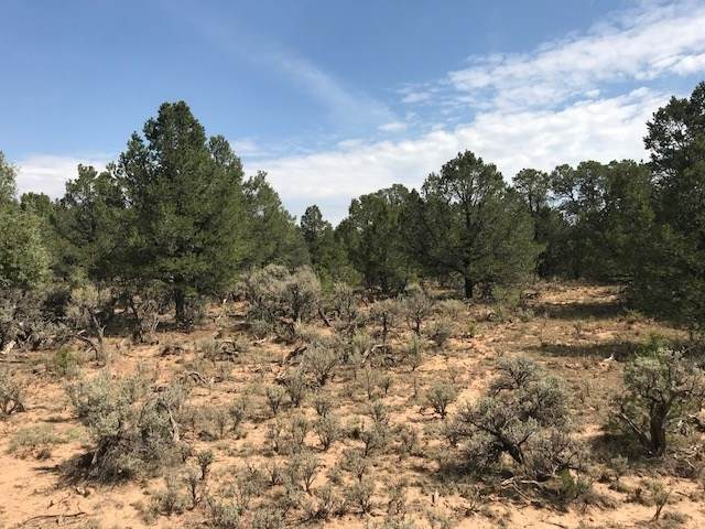 TBD FR 131 Mesa Las Vejas, Tierra Amarilla, NM 87551 (MLS #202004101) :: Stephanie Hamilton Real Estate