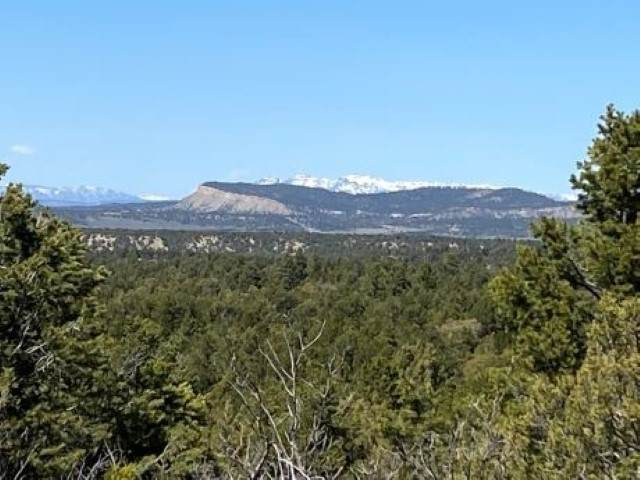 TBD County Road 312, Cebolla, NM 87518 (MLS #202101473) :: Summit Group Real Estate Professionals