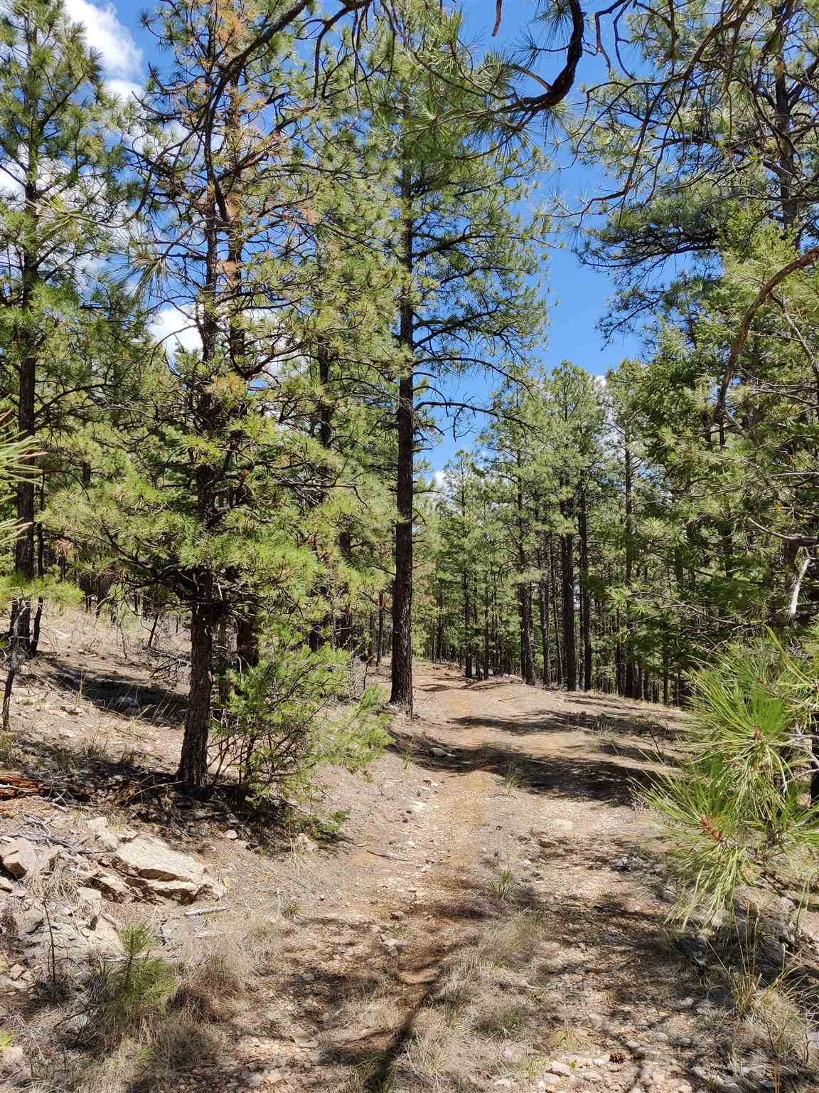 1198 Acres Off Of Goat Hill Road - Photo 1