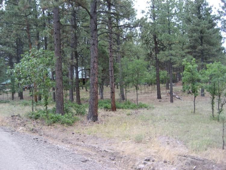 Block 1 Lot 24 Hollow Oak Ln. - Photo 1