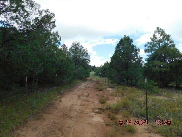 000 San Isidro Road, Tijeras, NM 87059 (MLS #202104681) :: Neil Lyon Group | Sotheby's International Realty