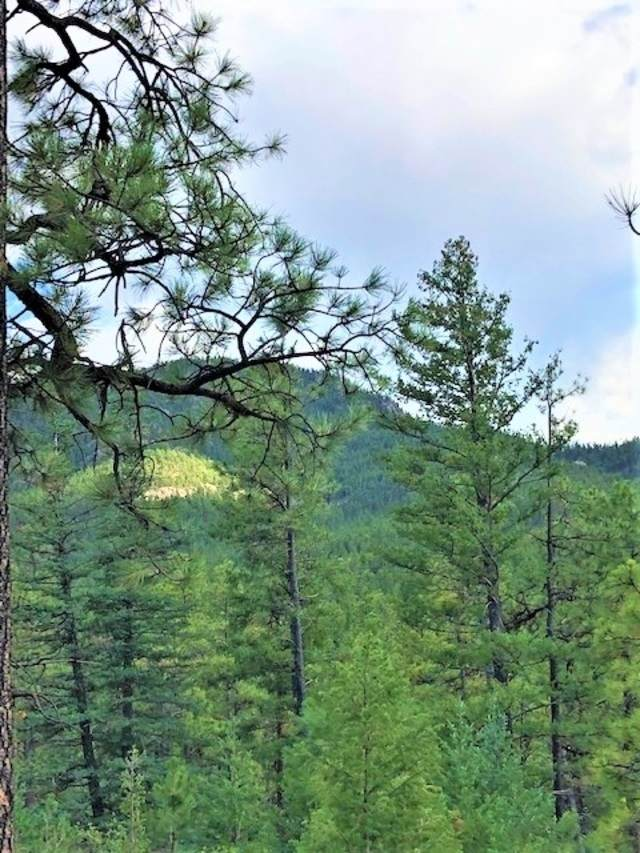 10 acres Trumbull Canyon, Mora, NM 87732 (MLS #202002327) :: Summit Group Real Estate Professionals