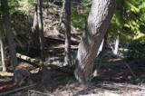 357 Corbett Creek Rd - Photo 4