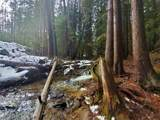 34009 Blanchard Creek Rd - Photo 15