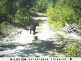 161 Ambush Grove Loop - Photo 1