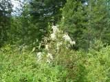 125 Calispel Trail Loop - Photo 16