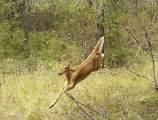 4154 U Deer Creek Rd - Photo 7