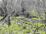 xxxx Deer Creek Rd - Photo 17