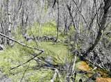 xxxx Deer Creek Rd - Photo 21