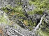 xxxx Deer Creek Rd - Photo 42