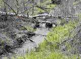 xxxx Deer Creek Rd - Photo 9