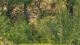 39420 Sun Ridge Rdg - Photo 27