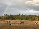 32805 Elk Chattaroy Rd - Photo 29