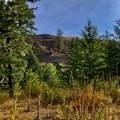 31293 Blue Grouse Dr - Photo 1