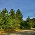 31293 Blue Grouse Dr - Photo 3