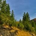 31293 Blue Grouse Dr - Photo 6