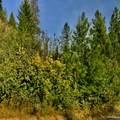 31293 Blue Grouse Dr - Photo 8