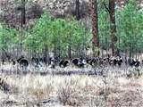 2975E Cottonwood Creek Rd - Photo 45