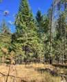 38XX Meadowlark Way - Photo 6