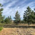 31075 Pine Hen Ln - Photo 5
