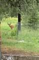 3397 Cottonwood Creek #D & #F Rd - Photo 40