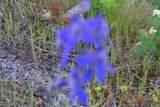 XX Blueridge Way - Photo 14