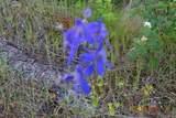 XX Blueridge Way - Photo 15