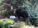 6004 Elk Ridge Ln - Photo 49