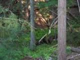 473 Reynolds Creek Rd - Photo 5