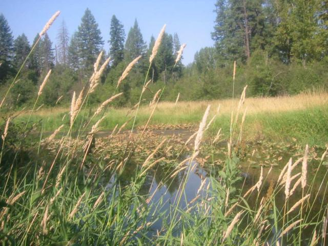 X Suther Ln, Elk, WA 99009 (#201910518) :: The Synergy Group