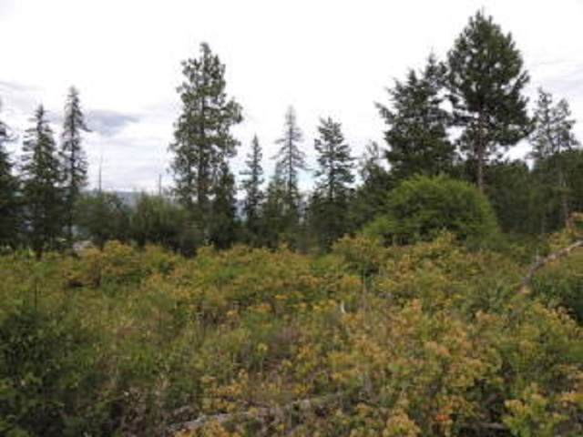 XX1 & 2 Wrights Valley Rd, Chewelah, WA 99109 (#202018982) :: RMG Real Estate Network